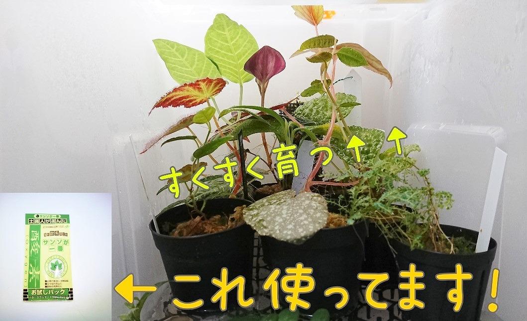 トップブリーダー推奨!? 熱帯植物を育てるための秘密アイテムとは?