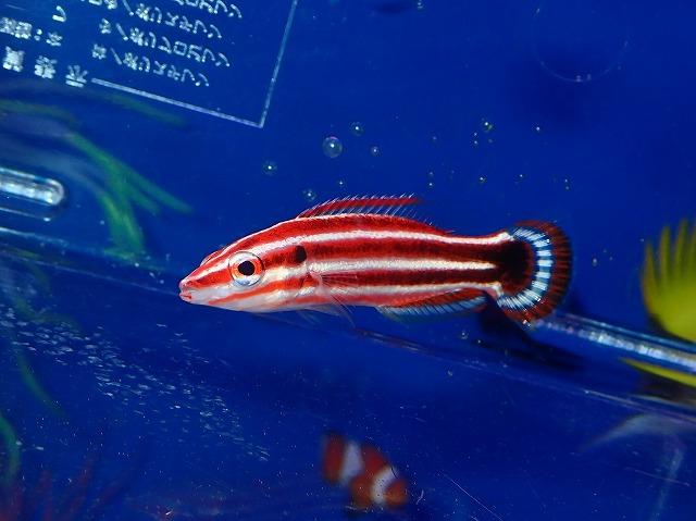 海水ならではの美魚たち~!