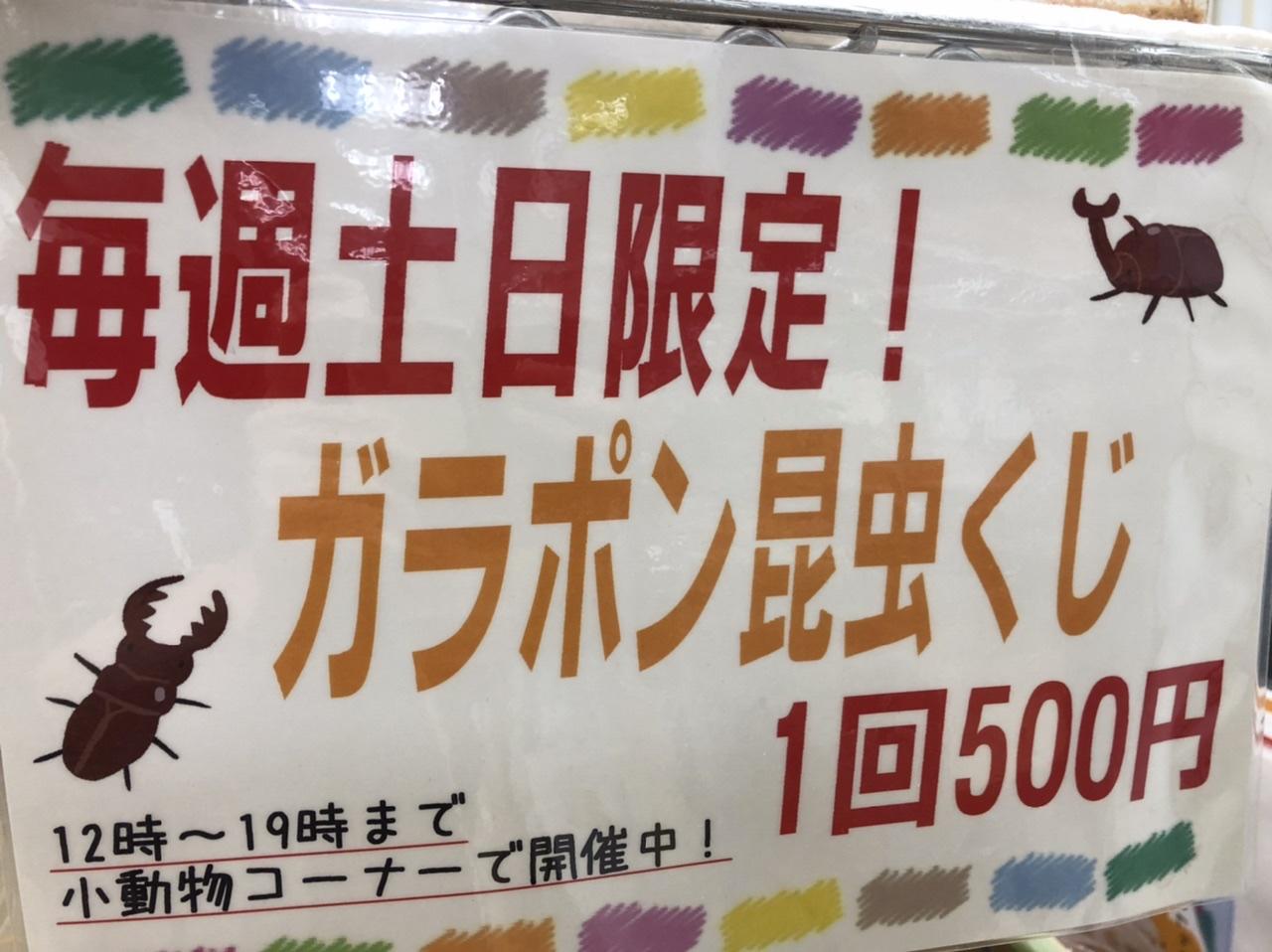 【インター小動物】今週も!土日はやります!昆虫くじ!
