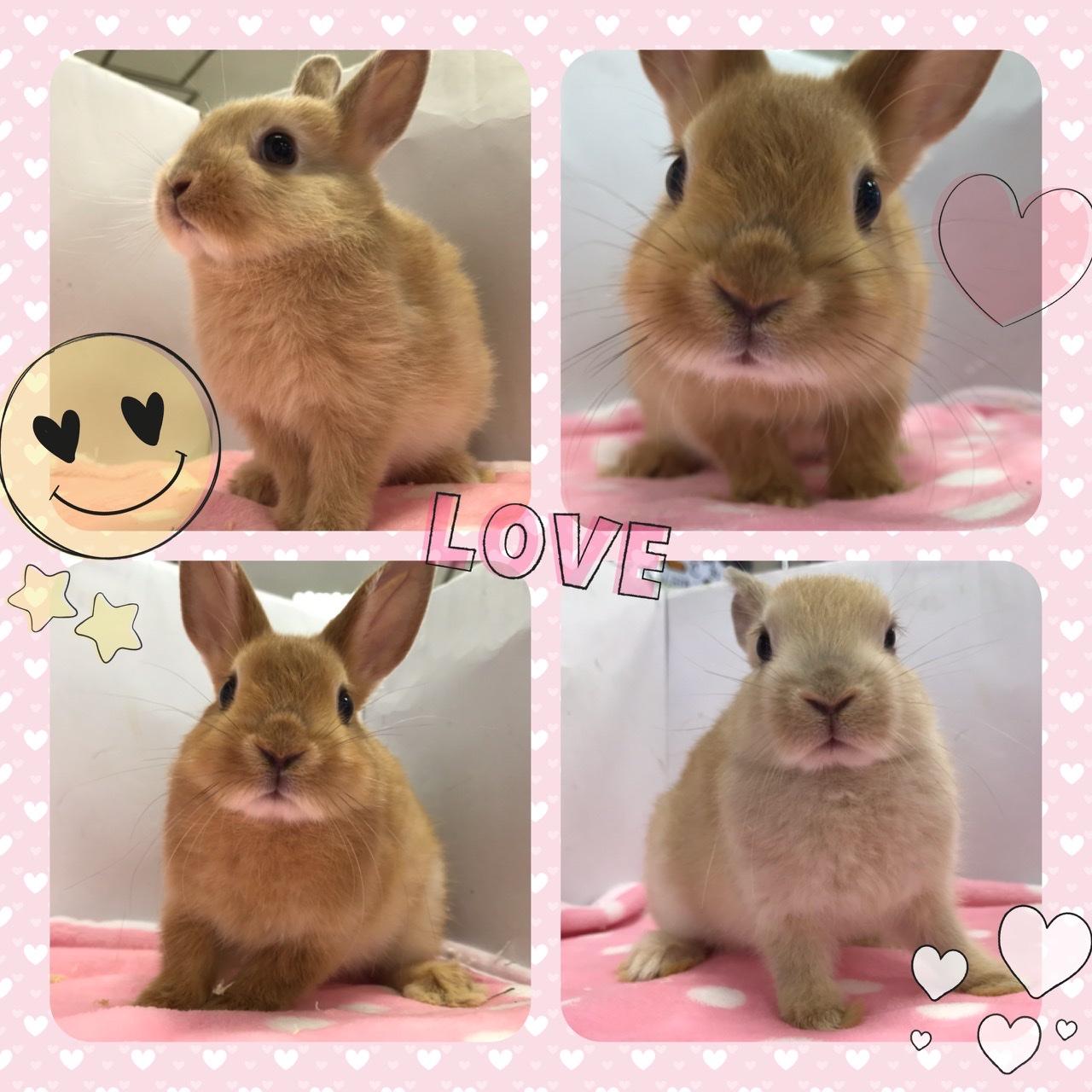 【インター小動物】ウサギ幼稚園開園ッ!!!!PART③