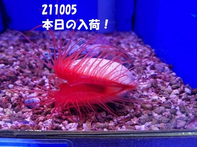 春日井店 海水ブログ 211005