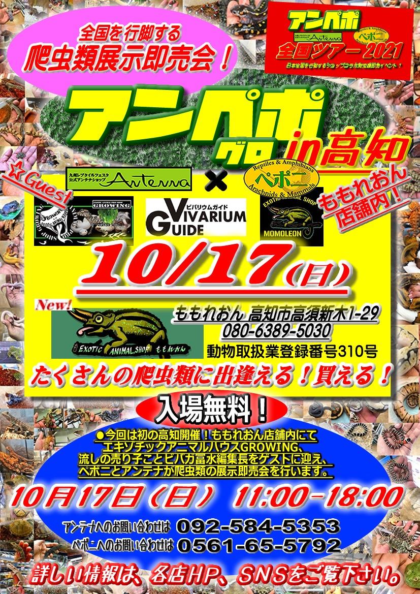 本日パッキングデー♪♪10/17(日)はアンペポin高知!