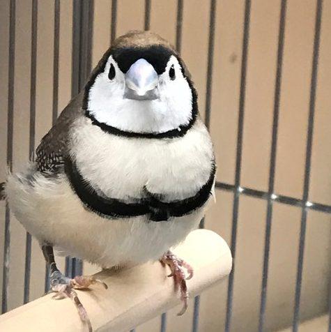 【mozoペポニ】カゴで飼えるペンギン